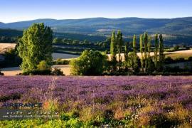 Provence & Paris in summer – โพรว๊องซ์ ปารีส เที่ยวเองได้ง่ายๆไม่ง้อทัวร์ ตอน 2
