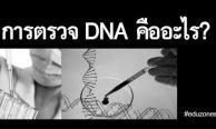 การตรวจ DNA คืออะไร? คลายข้อสงสัยของการตรวจ DNA