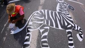 กระบี่สร้างสีสัน วาดทางม้าลายเป็นรูปสัตว์นานาชนิดทั่วเมือง