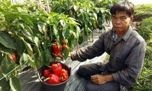 เกษตรทางเลือกปลูก'พริก-แอปเปิล'สู้แล้ง โกยรายได้งาม