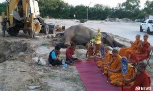 พังสำรวย ช้างป่วยเพราะเสียงพลุล้มแล้ว ชาวเน็ตลุ้นทั้งคืน