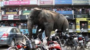 ระทึก ช้างป่าบุกเมือง อาละวาดทำลายสิ่งก่อสร้างเสียหายนับร้อย