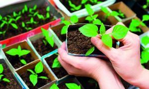 มือใหม่เลือกให้ถูก จะปลูกผักสายไหน เอาให้เหมาะ