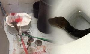 สถานเสาวภา ยัน น้ำมันทุกชนิดป้องกันงูโผล่ชักโครกไม่ได้