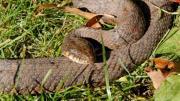 10 วิธีป้องกัน งู เข้าบ้าน