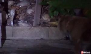 หมาแสนรู้เจองูแผ่แม่เบี้ยหลังบ้าน นั่งเฝ้าเห่าเรียกเจ้าของ