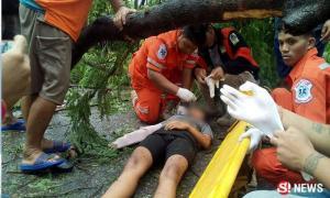 กระถินทั้งต้นโค่นทับร่างสาว 16 ขี่รถผ่าน โชคดีที่ไม่ตาย