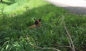 เศร้า ! เจ้าหลง สุนัขรอเจ้าของริมทาง ถูกรถชนตายแล้ว