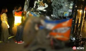 สุดเวทนา รถทัวร์พุ่งชนช้างพลาย ล้มตายคาหน้ารถ
