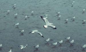 นกนางนวลมาแล้ว! พร้อมกับลมหนาวที่สถานตากอากาศบางปู