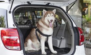 8 เทคนิคขับรถกับ 'สุนัข-แมว' ให้ปลอดภัย!
