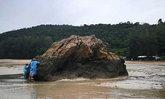 อาชีพเสริม ! เก็บ 'หอยติบ' ขาย สร้างรายได้งาม